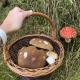 Pozor na houby, jejich úpravu i skladování
